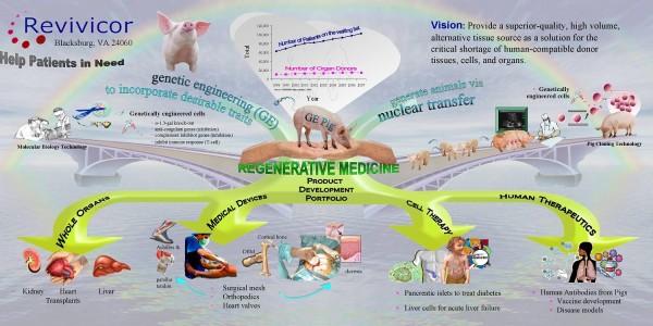 Cerdos GalSafe: la FDA aprueba cerdos modificados genéticamente para uso alimentario y médico