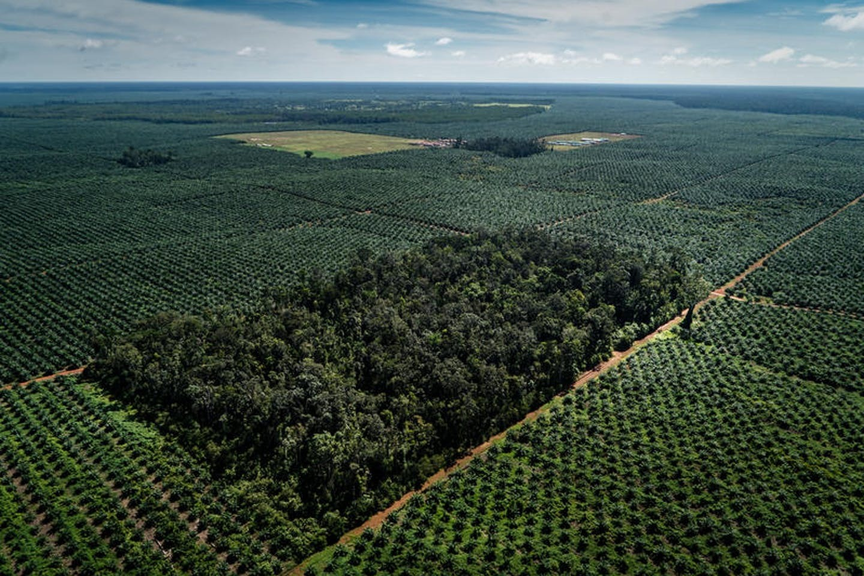 Palm Oil Deforestation Wilmar