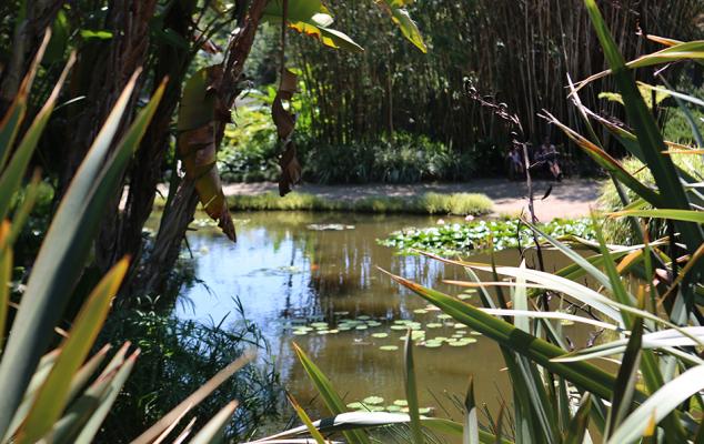 the huntington, huntington gardens, hutington library, botanical gardens, visit pasadena, pasadena, california, los angeles