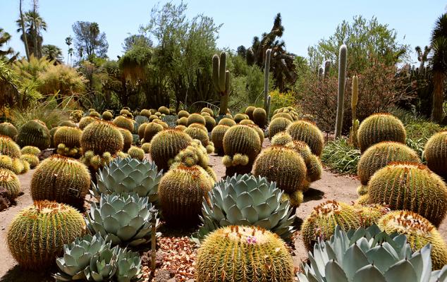 the huntington, huntington gardens, hutington library, botanical gardens, desert garden, visit pasadena, pasadena, california, los angeles