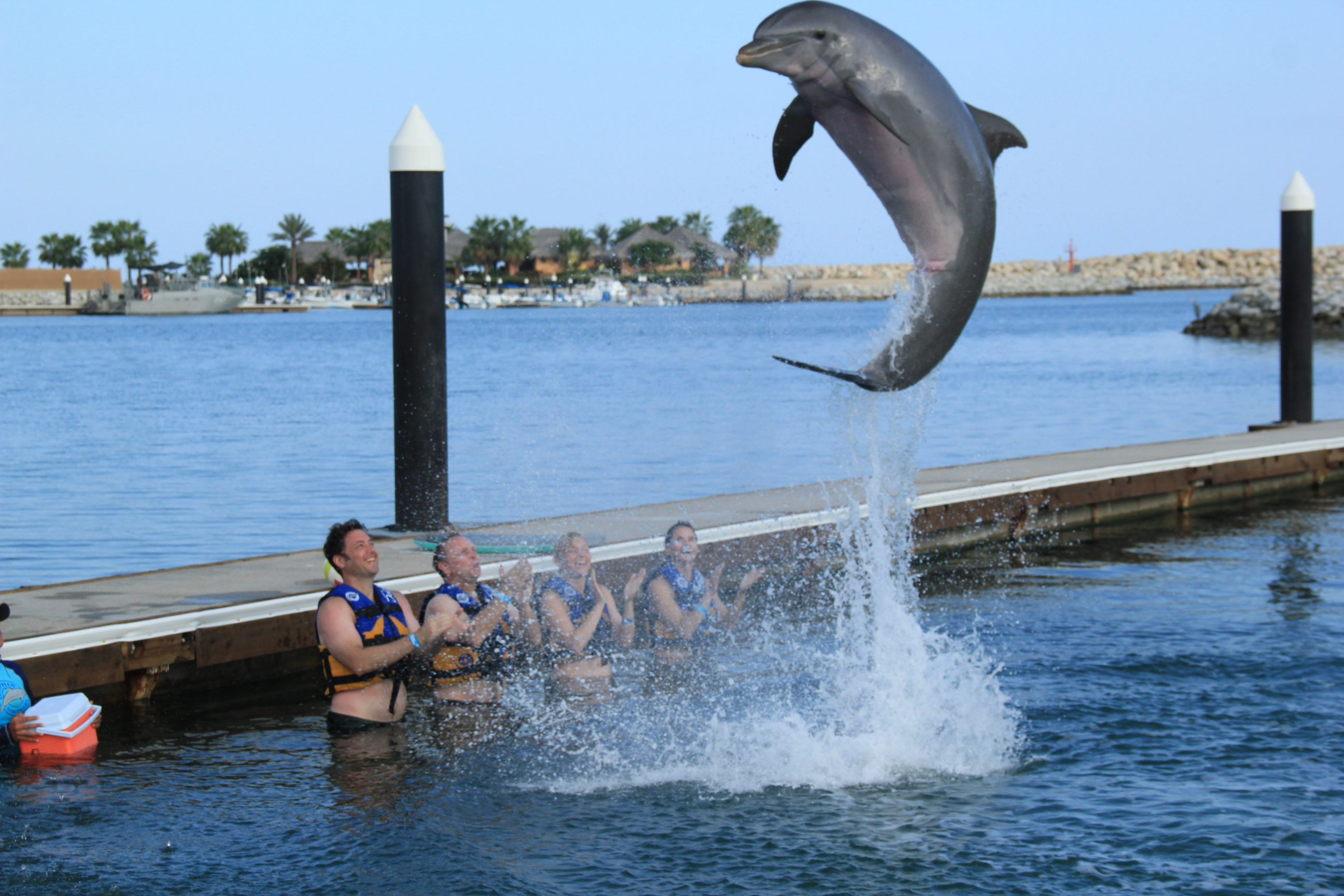 Dolphin Swim and Ride
