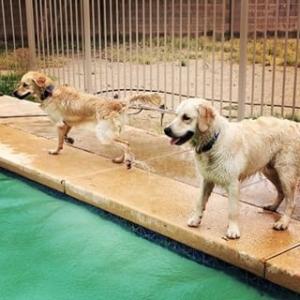 Pool_pups