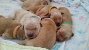 PVpups_day4