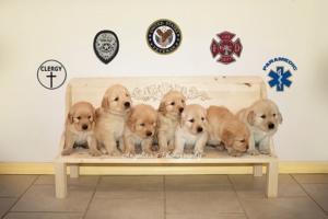 service puppies