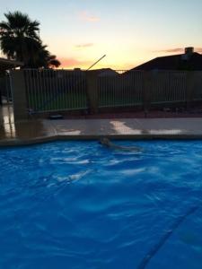 zeus swimming