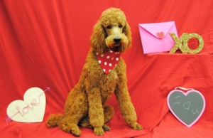 Bigby Valentine