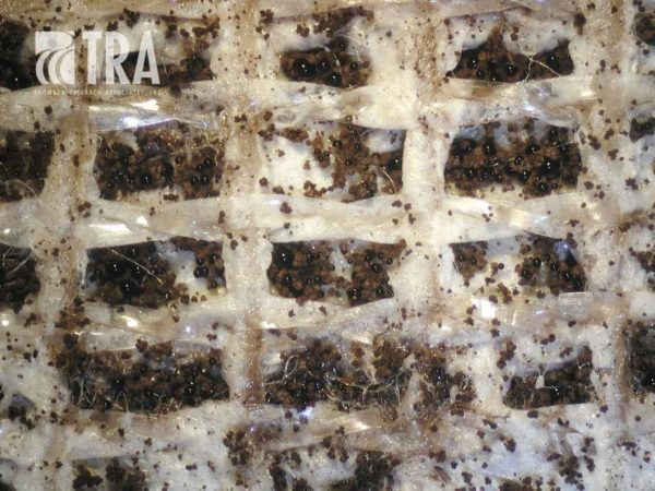 Carpet latex backing without antimicrobial additive
