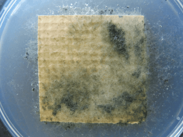 Vinyl with Competitor Antimicrobial