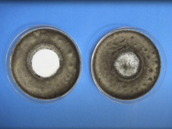 Antimicrobial air filter media vs untreated air filter media
