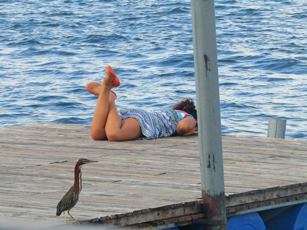 Green Heron and little girl small.JPG