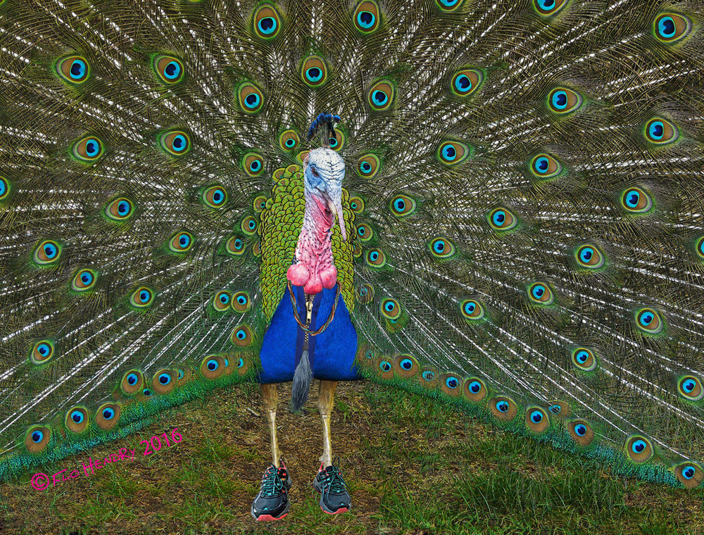 Peacock I Found It on Ebay sig.jpg