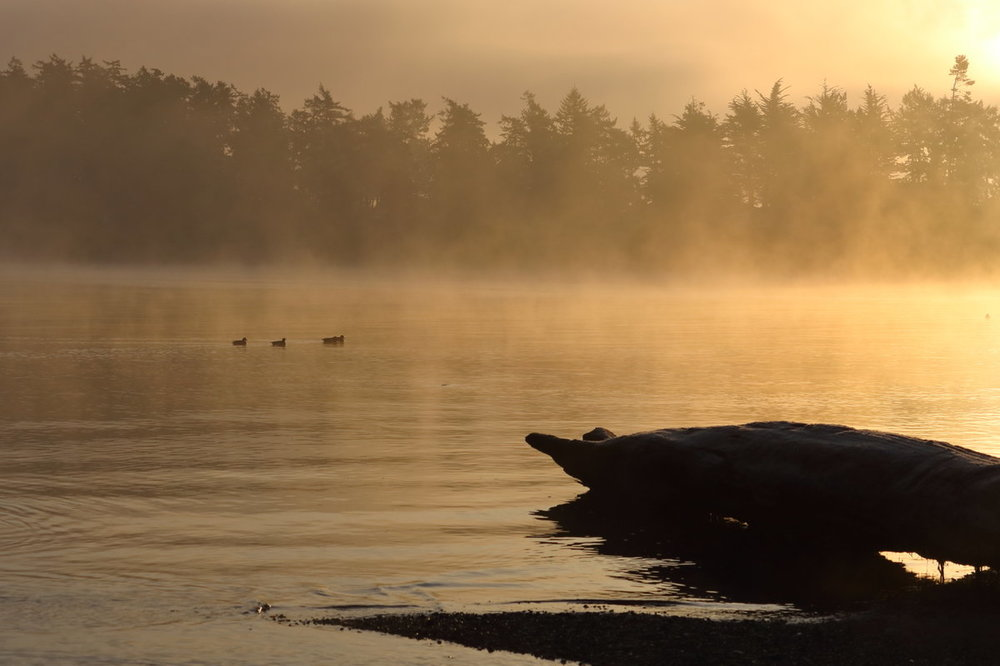 golden_log_ducks_mist_trees_1524.thumb.JPG.439f35026df64b800cf557e8af0cd966.JPG