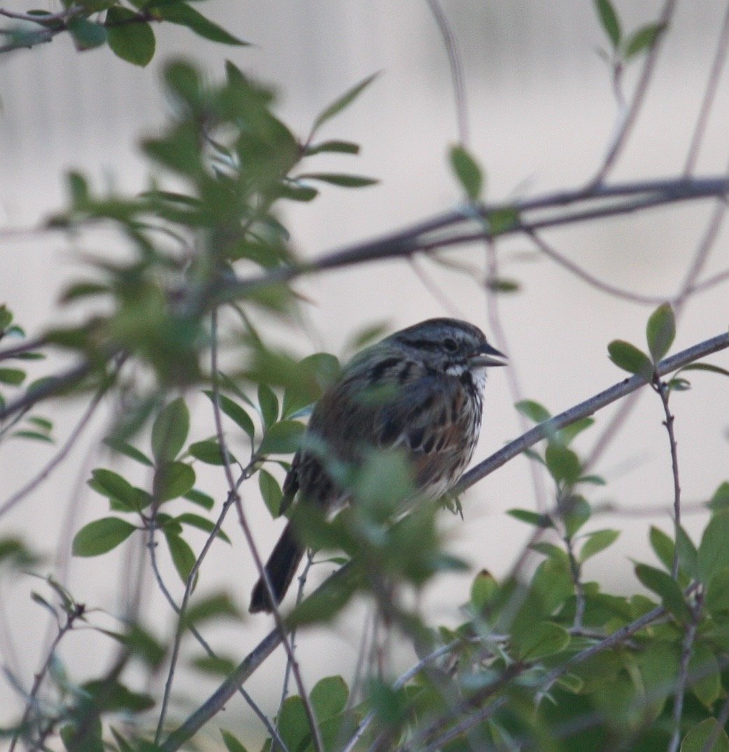 Backyard Birds Southern California - Help Me Identify a ...