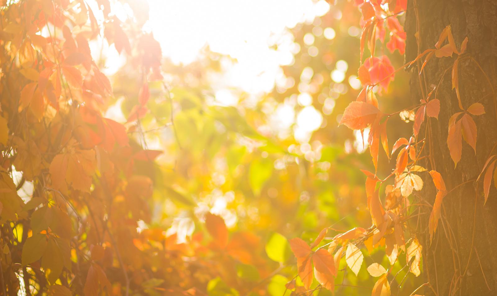 beautiful-sun-leaves-nature-spiritual-peace-freedom