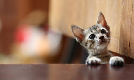 animal-animal-rights-baby-kitten-looking-up-on-table