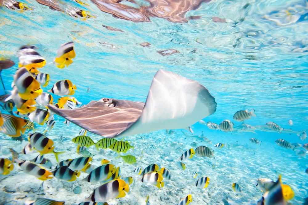 Bora Bora A Jewel in the Pacific (4)