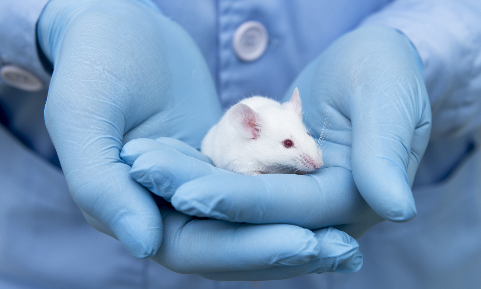 Could There Be a Worldwide Ban on Animal Testing for Cosmetics