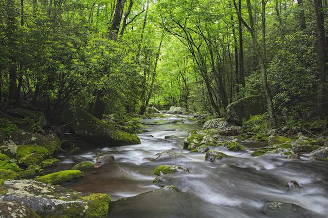 roaring-fork-creek
