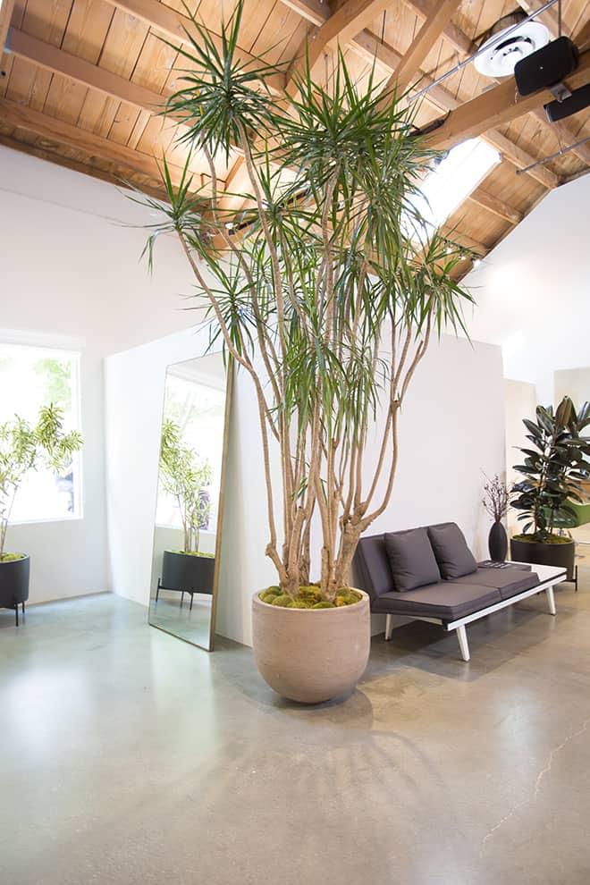 Celebrate-Eco-Friendly-Beauty-with-Loft-647-plants-nasa-sent-into-space-2
