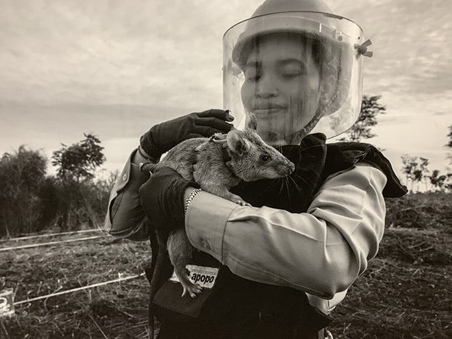 These-HeroRATS-Help-Save-Cambodians-by-Detecting-Landmines-APOPO-1