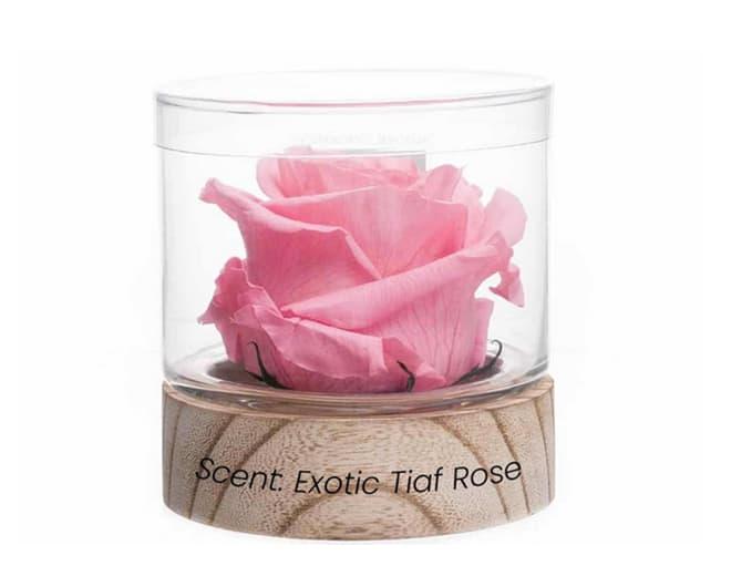 natural-fragrance-rose-elizabeth