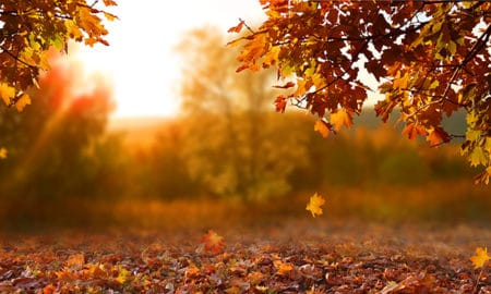 12-wine-destinations-for-the-perfect-fall-trips-fall-leaves-orange