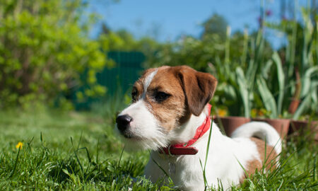 tips-for-new-dog-owners-dog-laying-in-grass