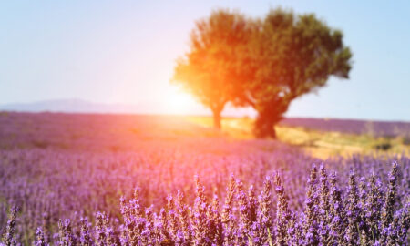 create-your-own-heaven-on-earth-beautiful-lavendar-field-at-sunset