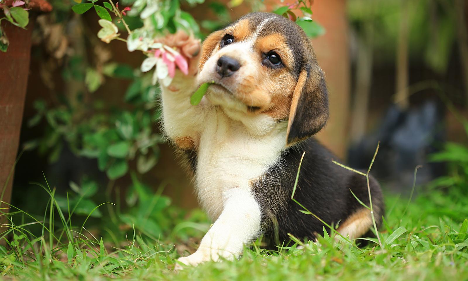 healthy-oils-to-add-to-your-dogs-diet-regimen-cute-puppy-sitting-in-grass
